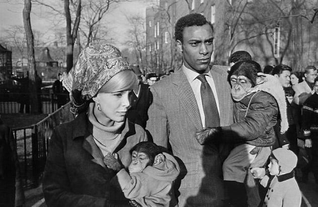 Garry Winogrand, Central Park Zoo