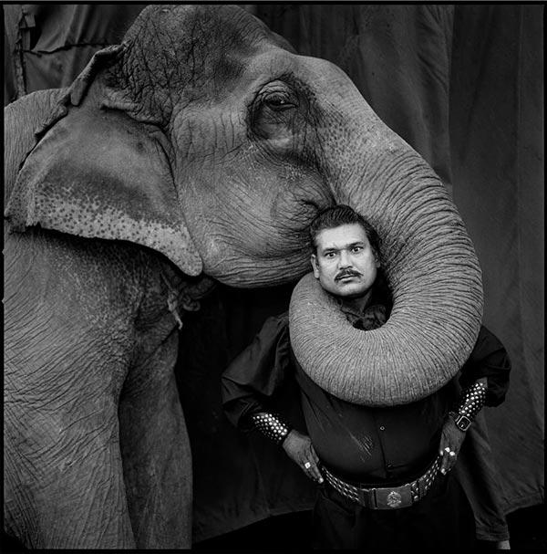 Elephant in India, Mary Ellen Mark